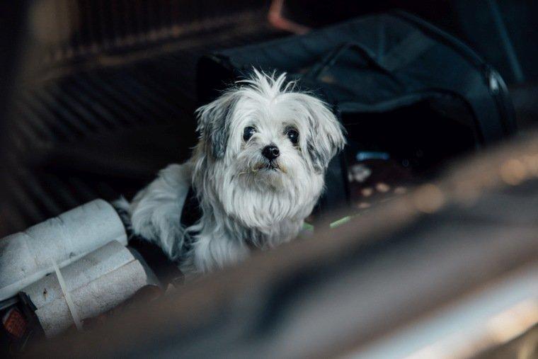 Hochzeitsfotos-Odenwald-Hochzeitsreportage-003-Hund