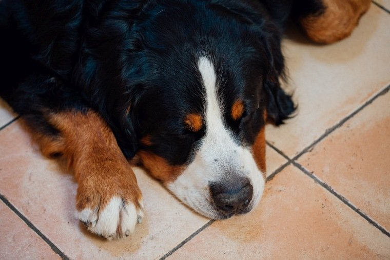 Hochzeitsfotos-Ludwigsburg-Hochzeitsreportage-008-Hund