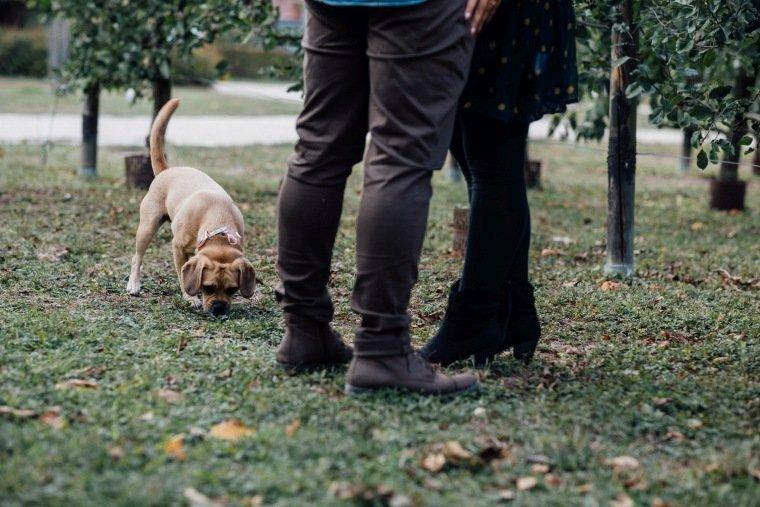 Paarfotos-Verlobung-Engangement-Shooting-Heilbronn-Botanischer-Garten-009-Hund